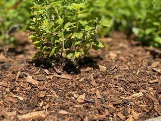 Mulch bodembedekkers