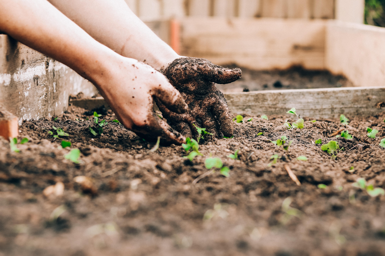 Wat is het verschil tussen tuinaarde en potgrond?